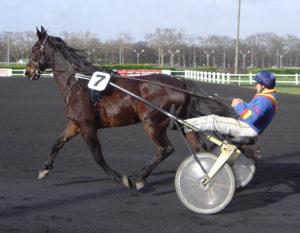 cavallo corsa